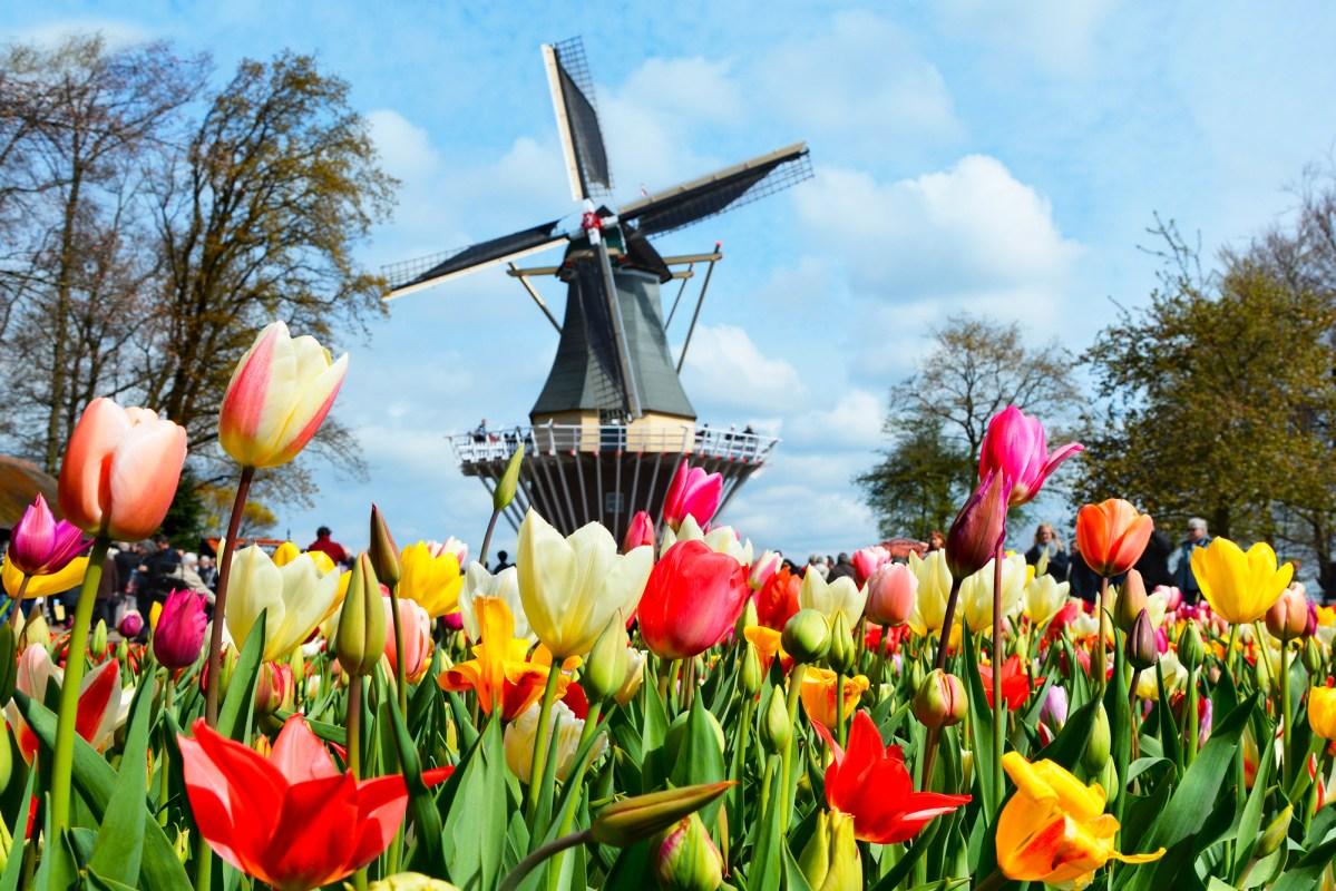 Olanda, 5 luoghi da visitare assolutamente