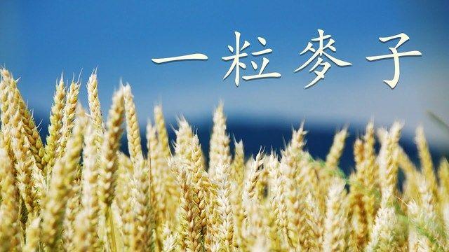經文旁白詩歌 | 《一粒麥子》 | 聖城基督教會