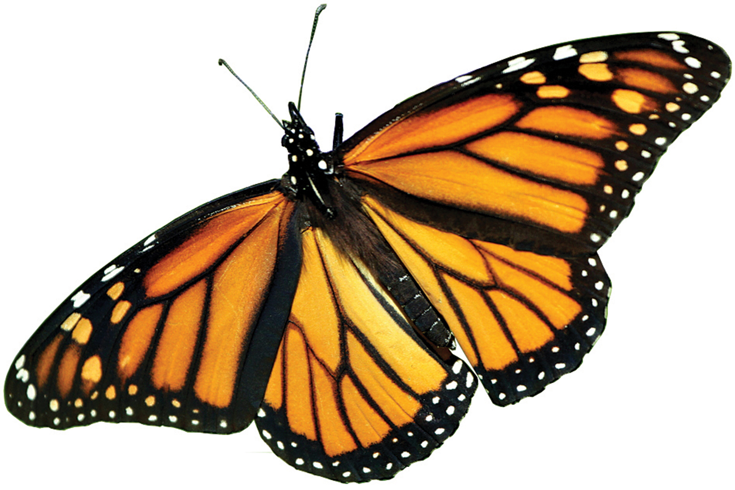 hight resolution of the farm bill and the precipitous decline of monarch butterflies the farm bill and the