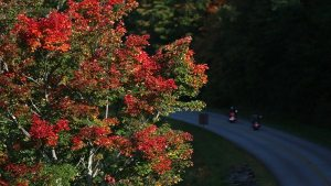 Oct. 9 Photo by Jim Morton | Grandfather Mountain Stewardship Foundation