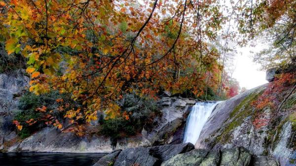 """Although leaves have peaked in the High Country, autumn remains colorful and vibrant, as demonstrated in this photo from Elk River Falls, located near the North Carolina-Tennessee border. According to Dr. Howie Neufeld, Appalachian State University professor of biology and """"Fall Color Guy,"""" locations lower than 3,000 feet above sea level are still working their way up to peak, while those below 2,500 feet are still predominantly green. As such, the view from high-elevation locations should make for colorful leaf-looking. For more fall color photos, click here: http://bit.ly/1QTBQjY Photo by Skip Sickler"""