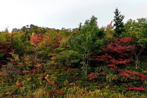 "Fall foliage smooths out the color palette at Rough Ridge on the Blue Ridge Parkway (MP 302.8). According to Dr. Howard Neufeld, ""Fall Color Guy"" and biology professor at Appalachian State University, this weekend should be a prime time to visit the higher elevations along the Blue Ridge Parkway, with this weekend and the next bookending the peak color season. Photo by Skip Sickler 