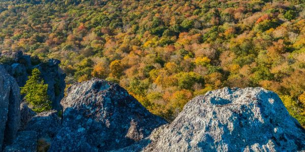 Grandfather Mountain's Linville Bluffs looks down upon the fall color below. Throughout autumn, Grandfather Mountain's high elevation allows visitors to practically see the season in its entirety, as color change rolls through the valleys below. But since the leaves are currently changing higher up, those visiting Grandfather Mountain this weekend can expect long lines. To avoid the wait and the beat the lines, visitors are encouraged to purchase their tickets online at https://goo.gl/H4iLBm. Photo by Skip Sickler | Grandfather Mountain Stewardship Foundation