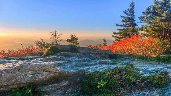 Huckleberries, pinkshell azalea and withrod glow bright in the sunrise near Grandfather Mountain's Top Shop. Photo by Skip Sickler | Grandfather Mountain Stewardship Foundation