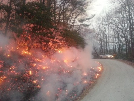 Photo courtesy U.S. Forest Service