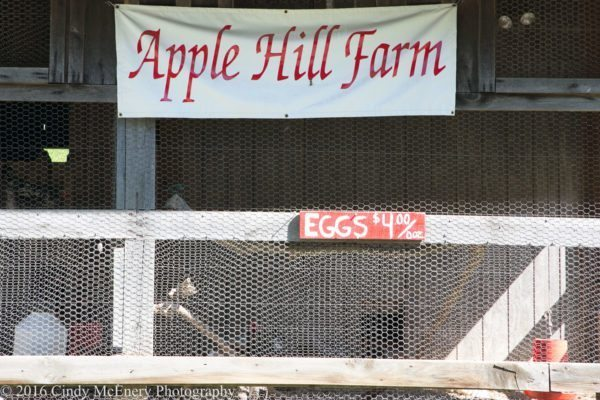 2016-august-apple-hill-farm-knitting-0313-600x400