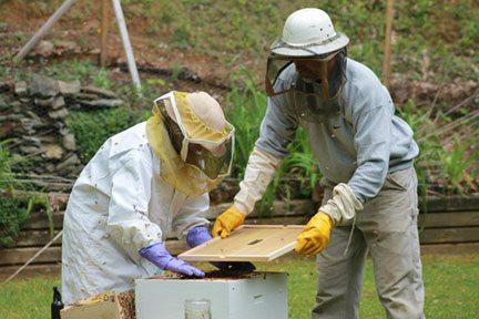 Beekeepers reduced