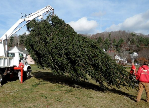 The massive evergreen is readied by Hunter's Tree Service personnel.