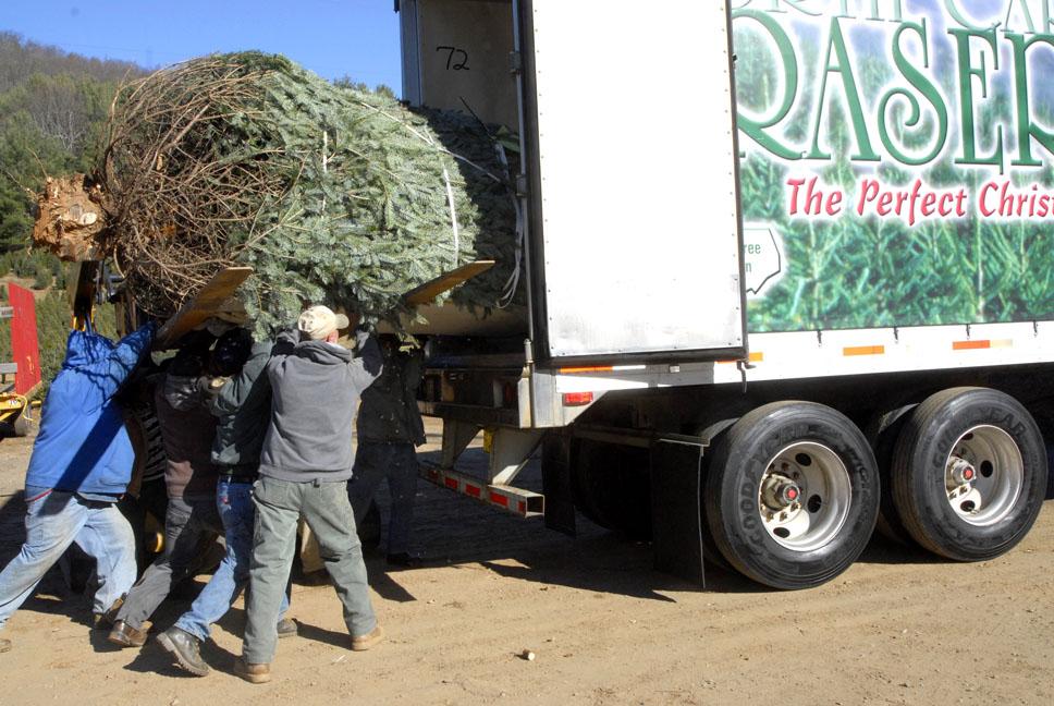 Photos & Video: Jefferson Christmas From Peak Farms Tree