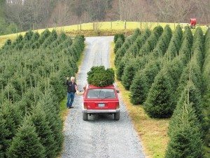 A family takes home a tree for the holidays. Stock photo by Ken Ketchie