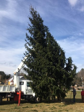 Hunter's Tree Service helps establish the giant evergreen that will serve as community Christmas Tree for events in downtown Banner Elk this year. Photo by Jim Swinkola.