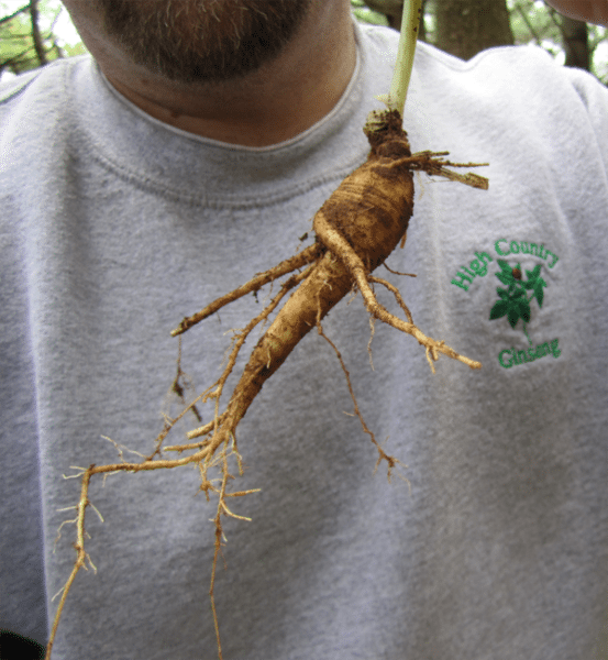 A fellow holds up a ginseng root. Photo courtesy Jim Hamilton