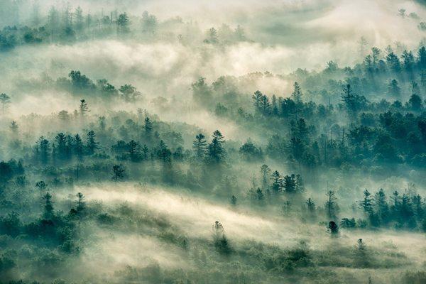 """""""Thru the Mist"""" by Kathryn Greven"""