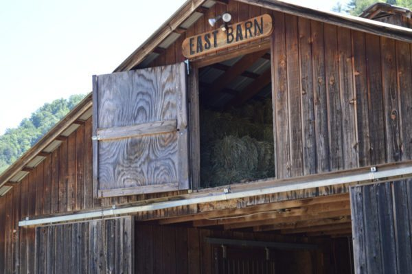 leatherwood11