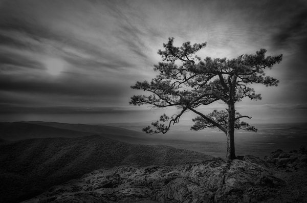 """Raven's Roost in Black & White"" by Todd Feldman"