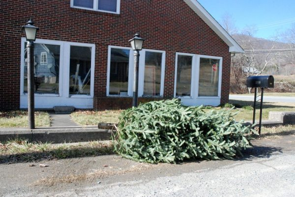 A Christmas tree on the curb waits to be taken away. Photo by Ken Ketchie
