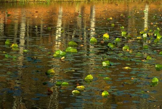 willis_bass_lake_reflection
