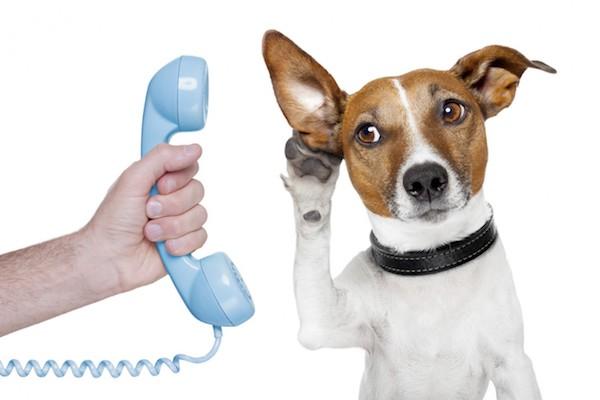 conference call con garanzia soddisfatto o rimborsato