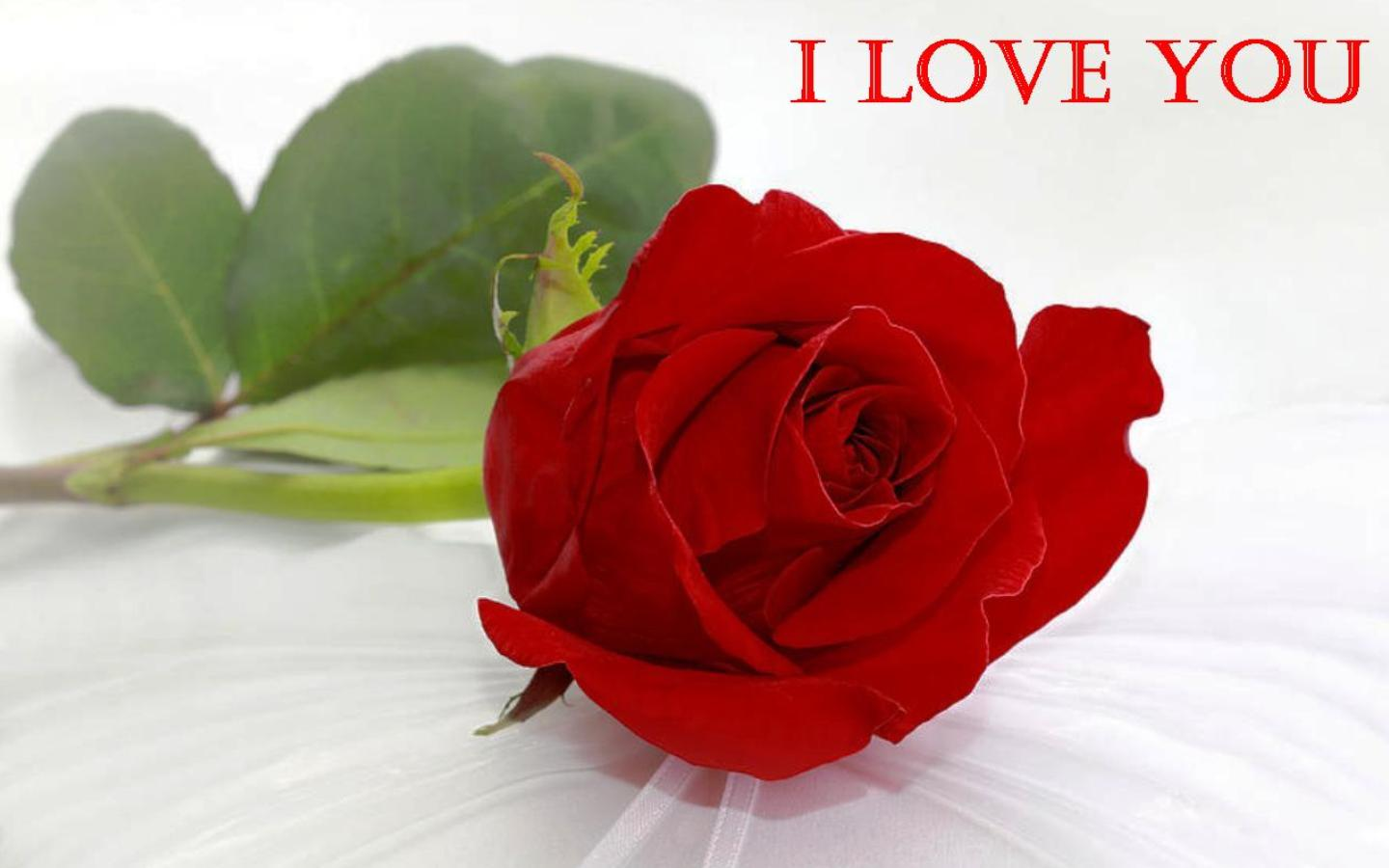 Download Free Wallpaper Roses Love Gallery