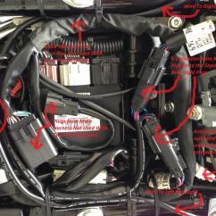 2003 Harley Road King Wiring Diagram Radial Nerve Davidson 2002 Fuse Box Get Free Image