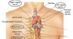 Vagus-nerve