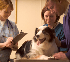 Veterinarians Mailing List