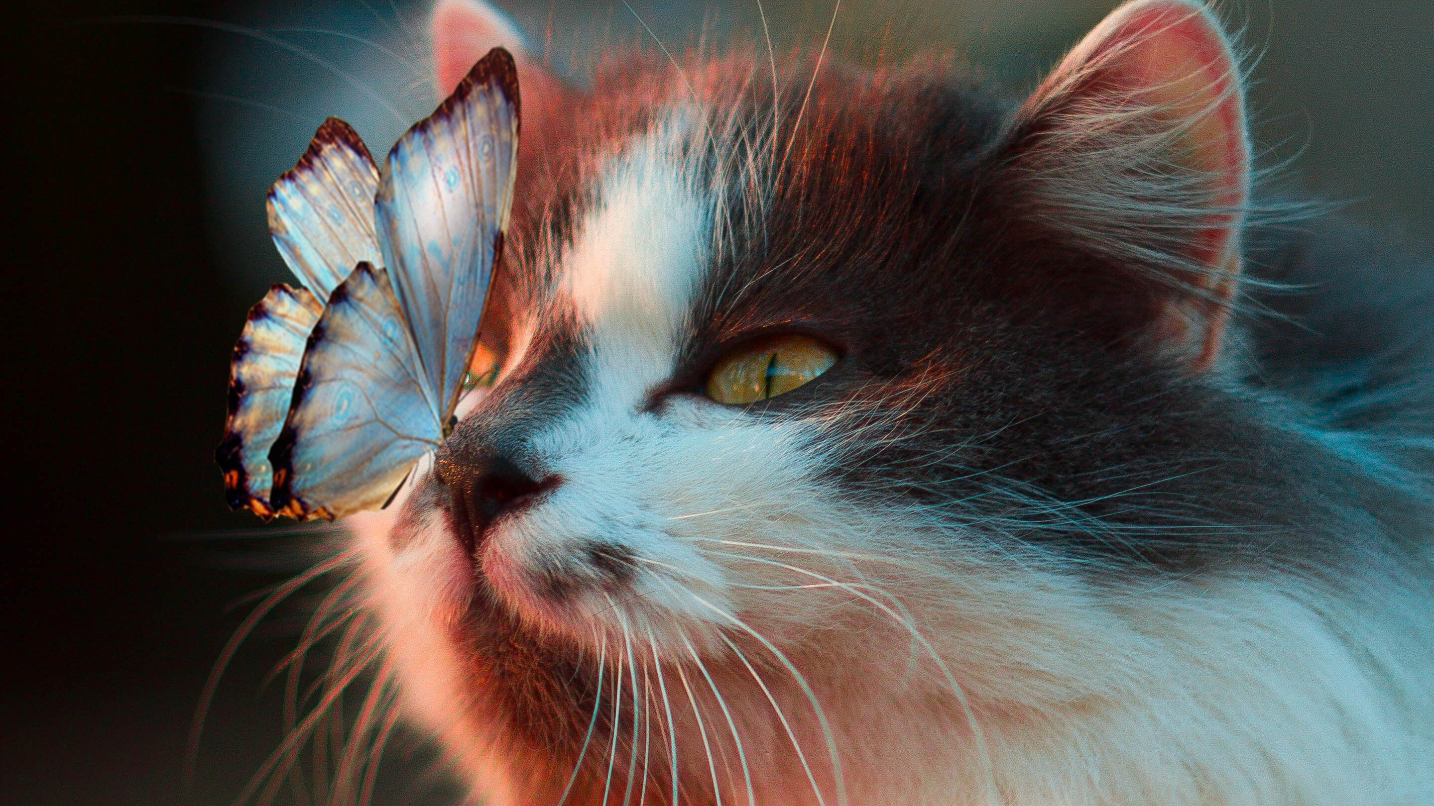 Cute Drawings Wallpapers Of Cats Butterfly On Cute Cat Face Hd Wallpapers