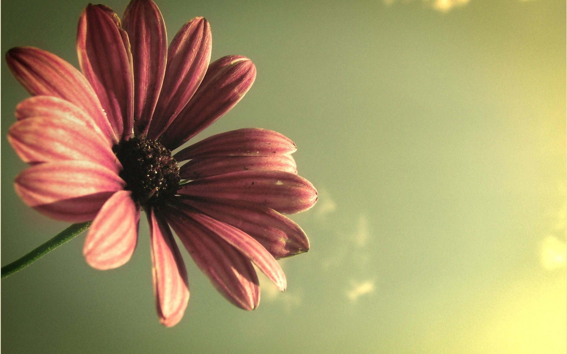 God Related Quotes Wallpaper Beautiful Flower Hd Image Hd Wallpapers