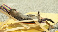 Funny Cat Sleeping on Beach Chair Photos | HD Wallpapers