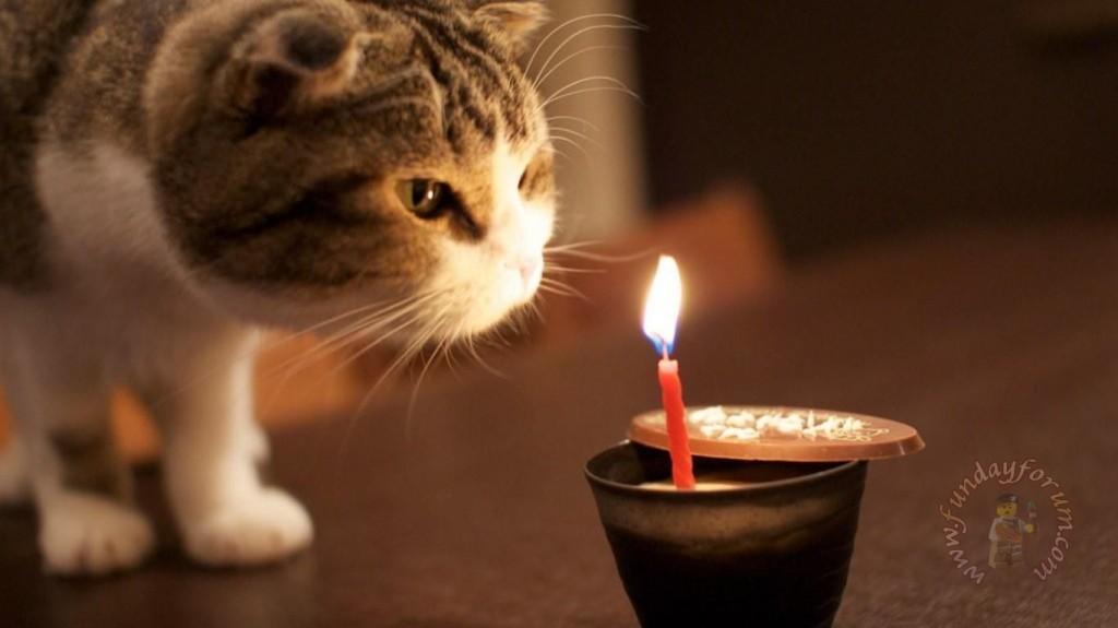 Free Animated Cards Facebook Birthday