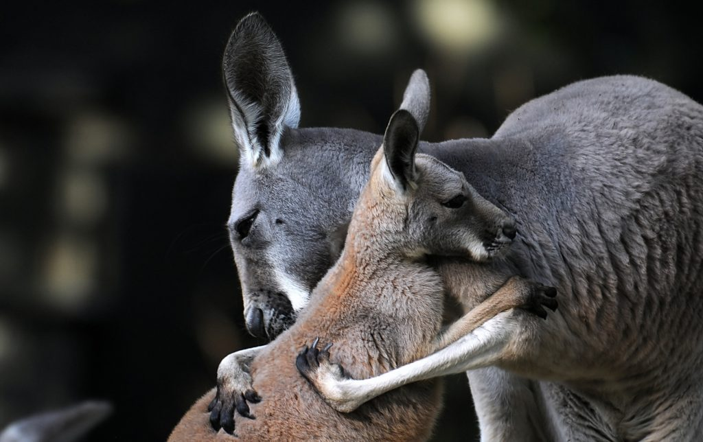 How To Set Live Wallpaper On Iphone X Kangaroo Wallpapers Pictures Images