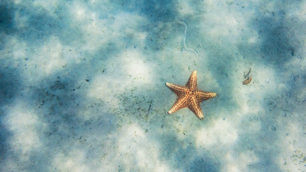 Iphone X Wallpaper Download Hd Starfish Wallpapers Pictures Images