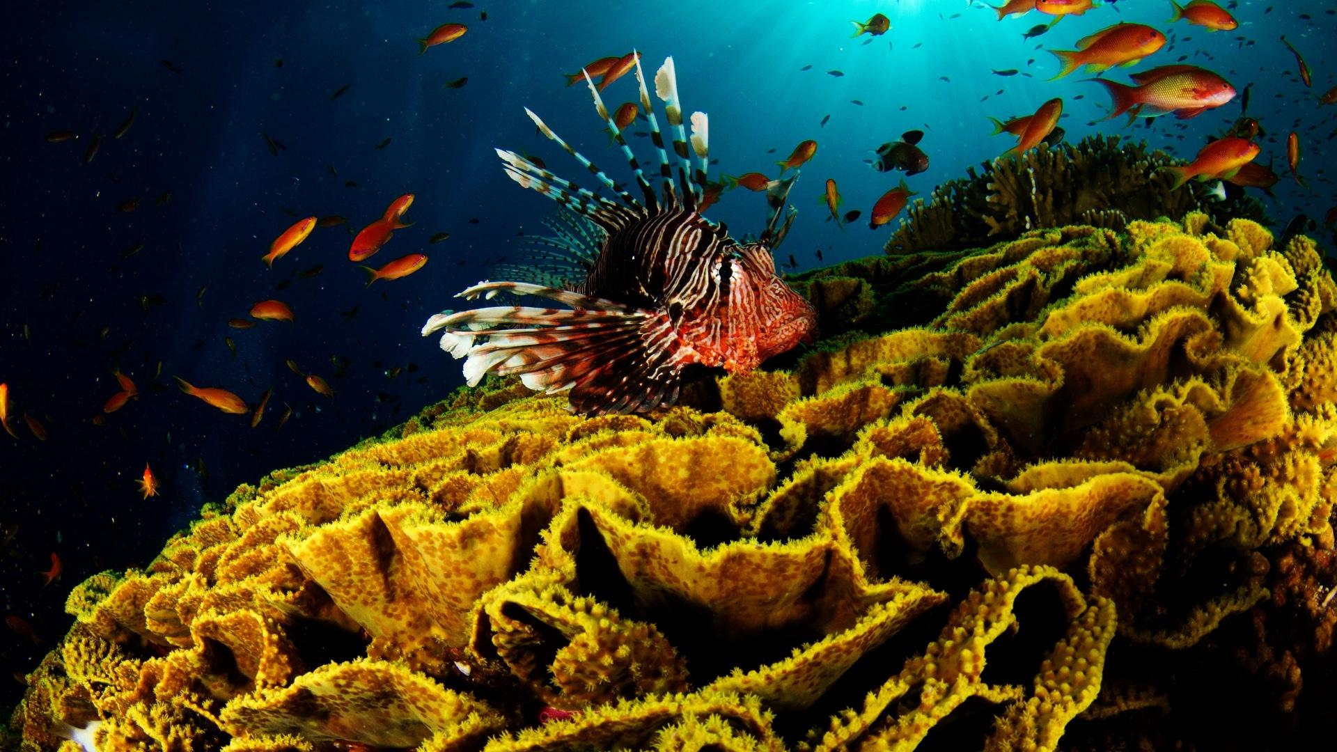 Fall Wallpaper Hd For Galaxy S4 Hd Underwater World Hd Wallpaper Download