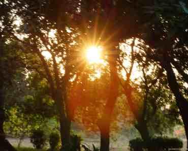 sun peeking through the woods
