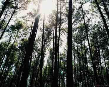 Bogor Forest