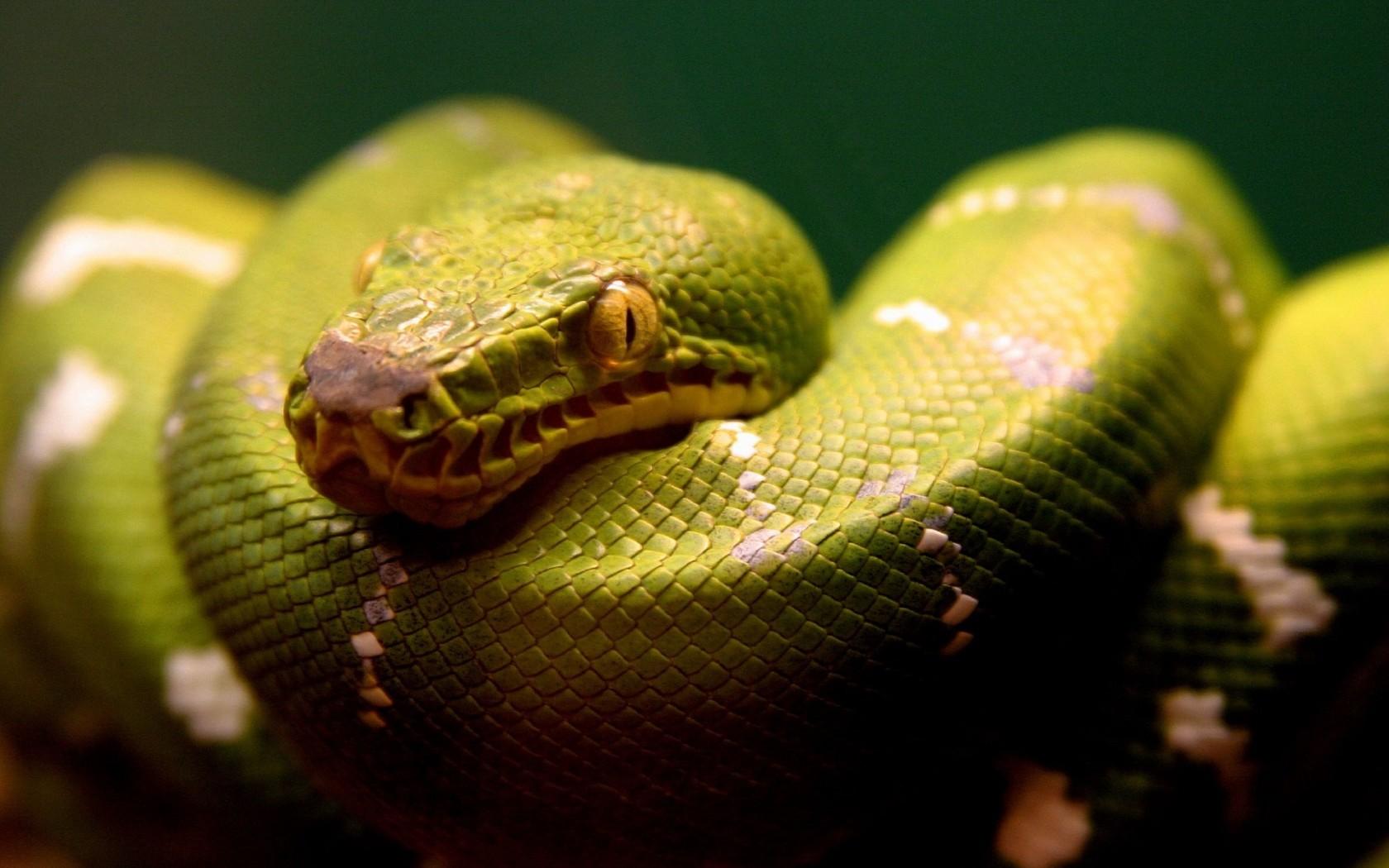 Cute Snake Hd Wallpaper A Green Snake Wallpapers Hd Wallpapers Id 5045
