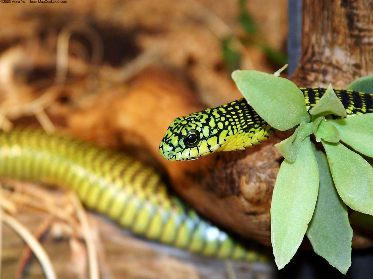 Hd Cute Animal Wallpapers 1080p A Green Snake 2 Wallpapers Hd Wallpapers Id 4931