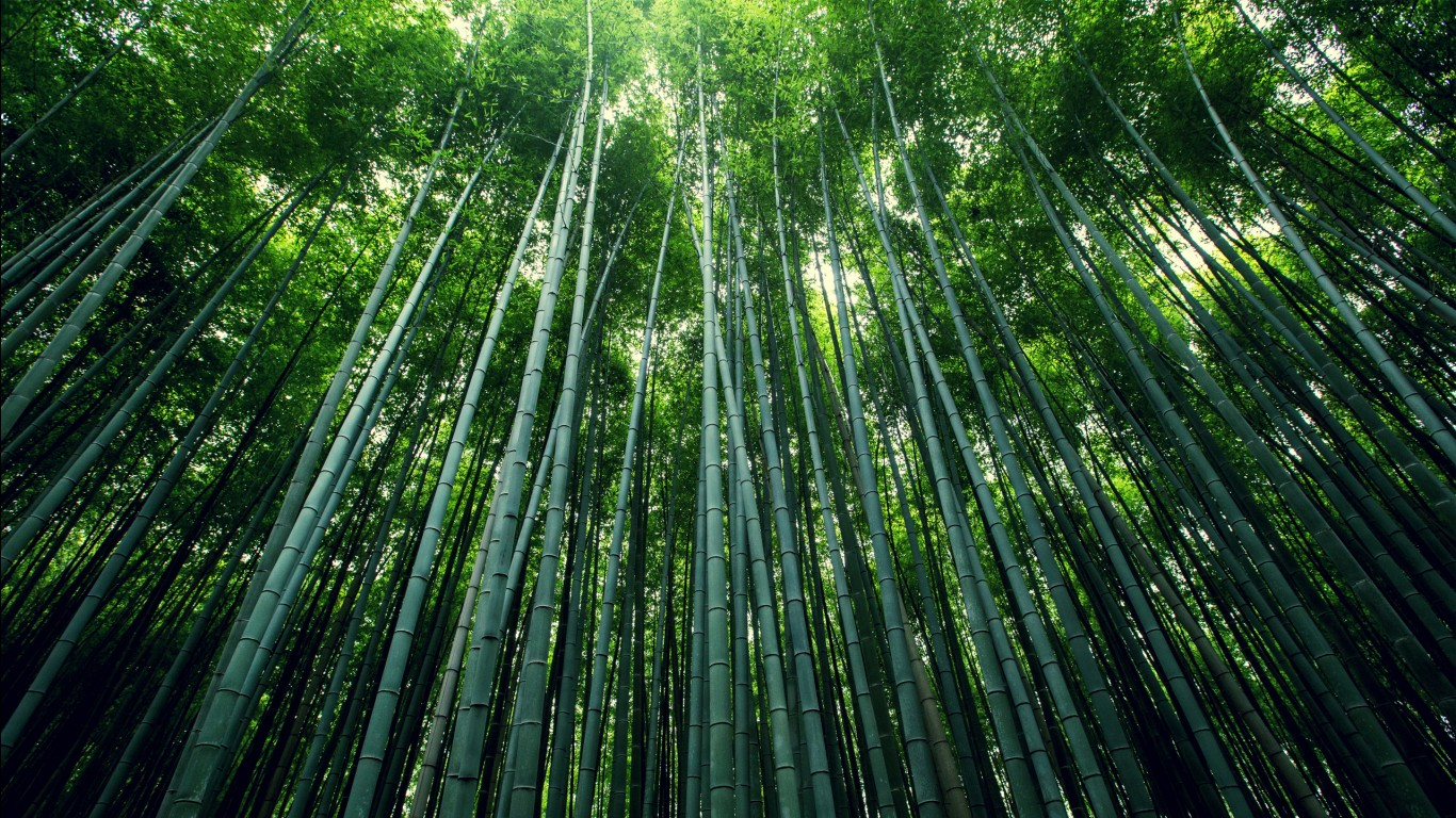 Top Iphone Wallpapers Hd Bamboo Forest Wallpapers Hd Wallpapers Id 15860