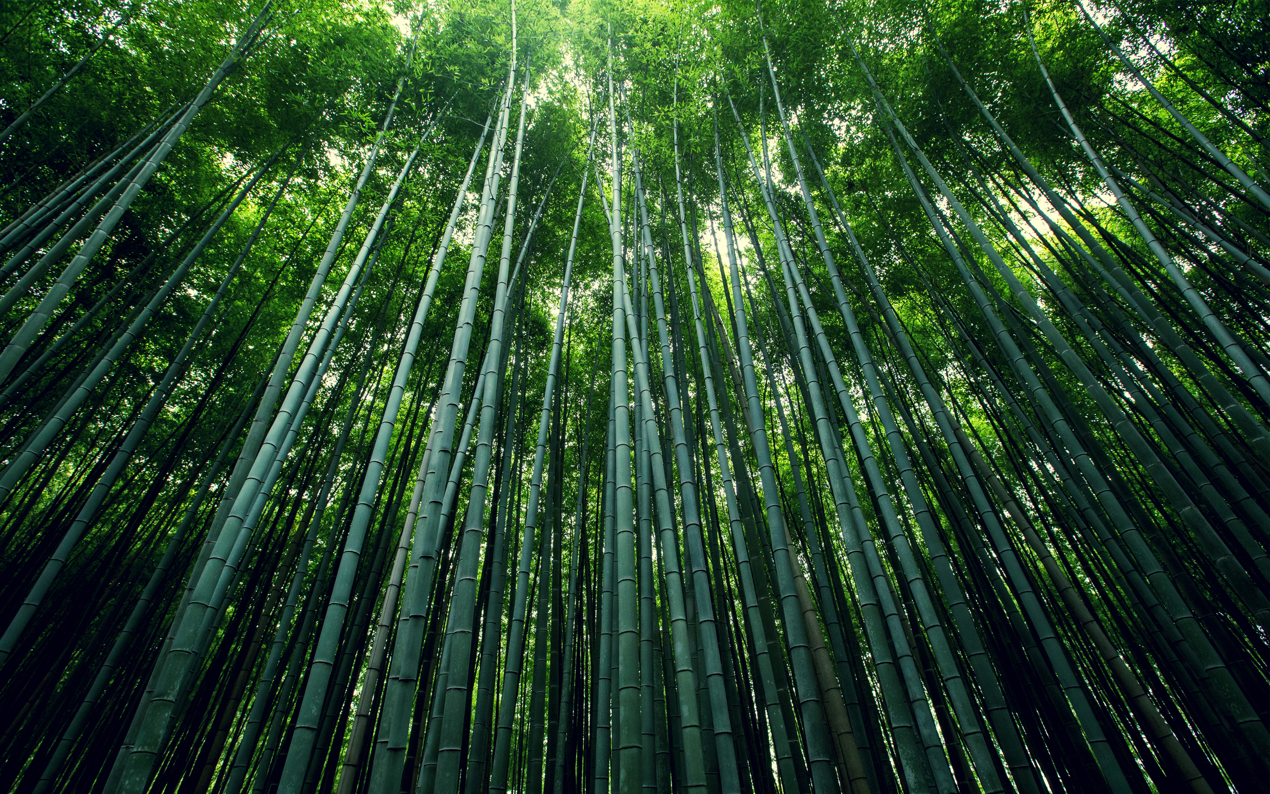 bamboo forest wallpapers hd