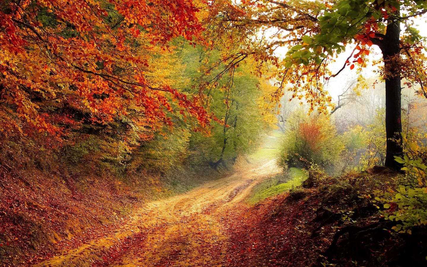 Fall And Autumn Wallpaper Beautiful Autumn Road Wallpapers Hd Wallpapers Id 16828
