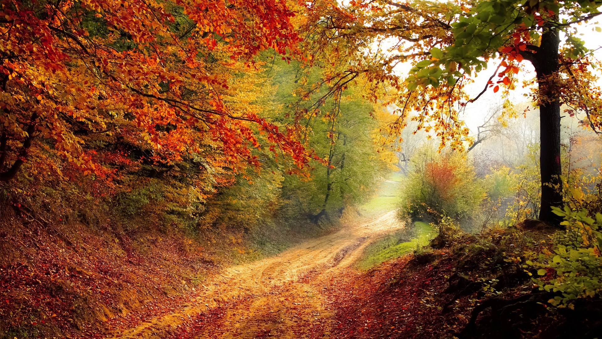Pure Michigan Fall Wallpaper Beautiful Autumn Road Wallpapers Hd Wallpapers Id 16828