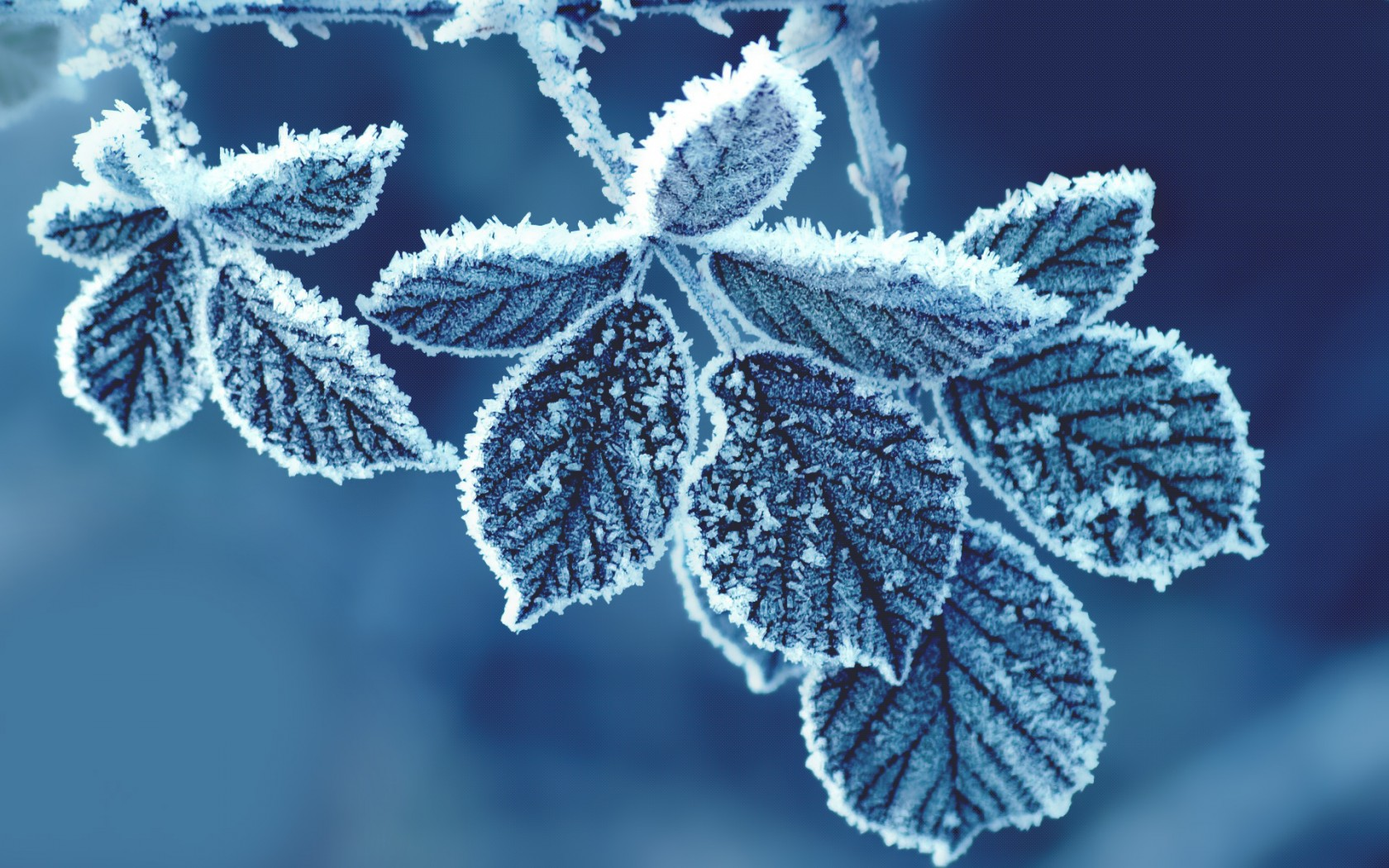Cute Wallpaper For Androids Cold Leaves Wallpapers Hd Wallpapers Id 12712