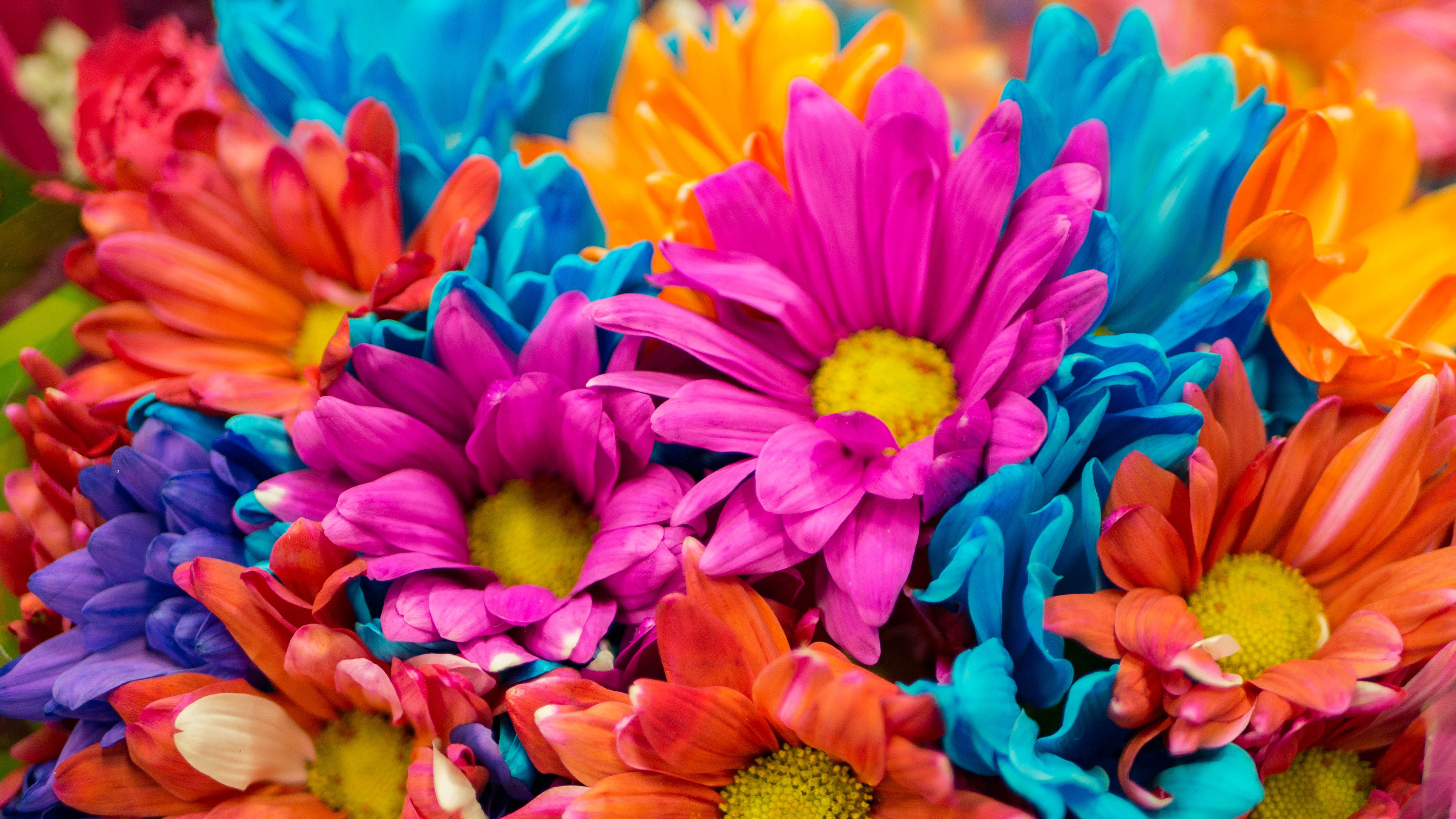Cute Pink Wallpapers Download Colorful Flowers 4k Wallpapers Hd Wallpapers Id 28638