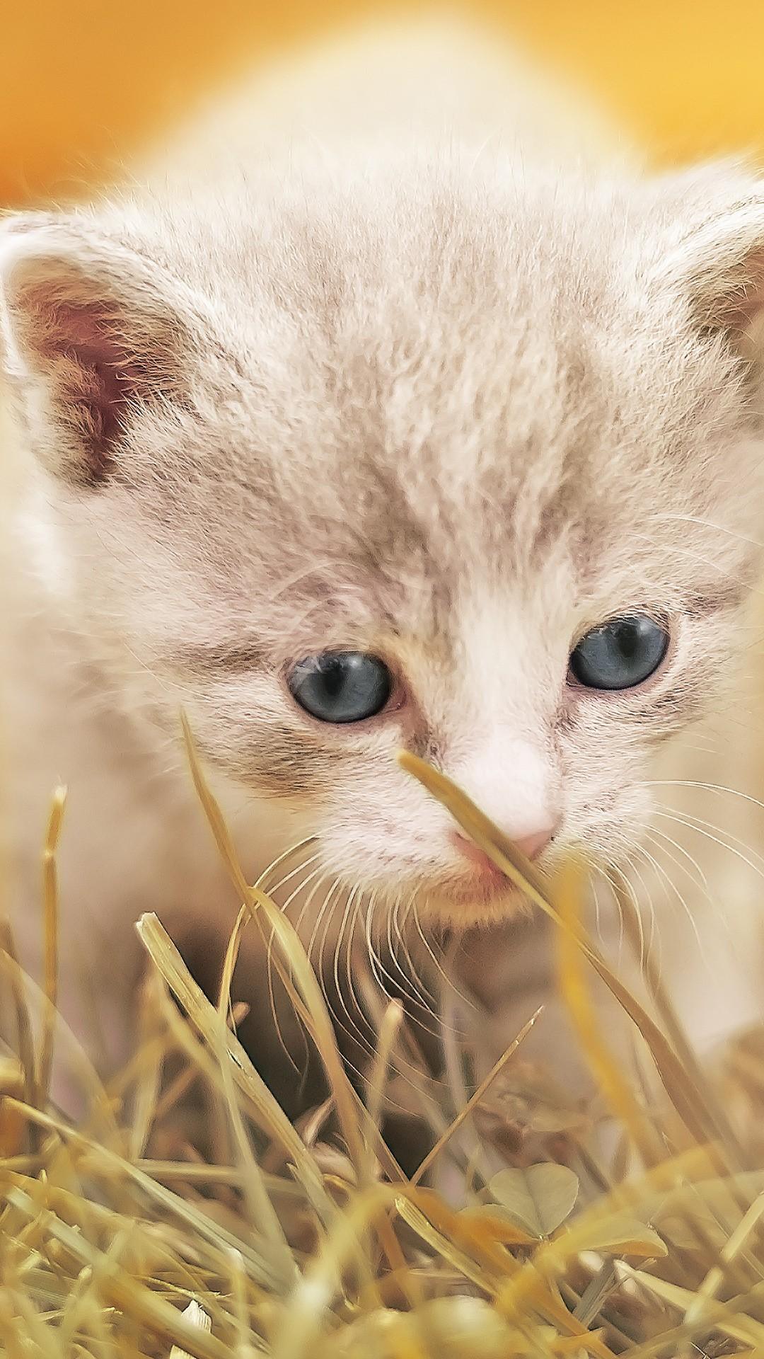 Cute Kittens Wallpaper For Iphone Cute Kitty Hd Wallpapers Hd Wallpapers Id 21257