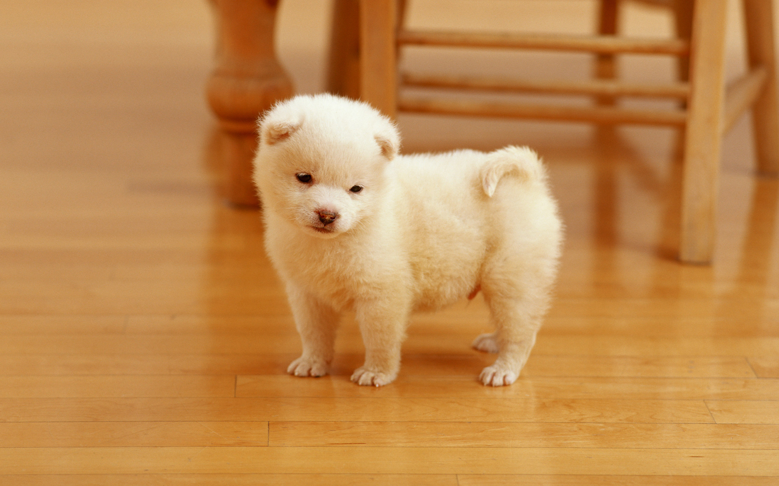 cutest puppy wallpapers hd