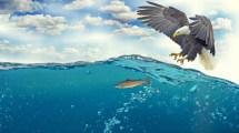 Eagle Fish Underwater 4k Wallpapers Hd Id