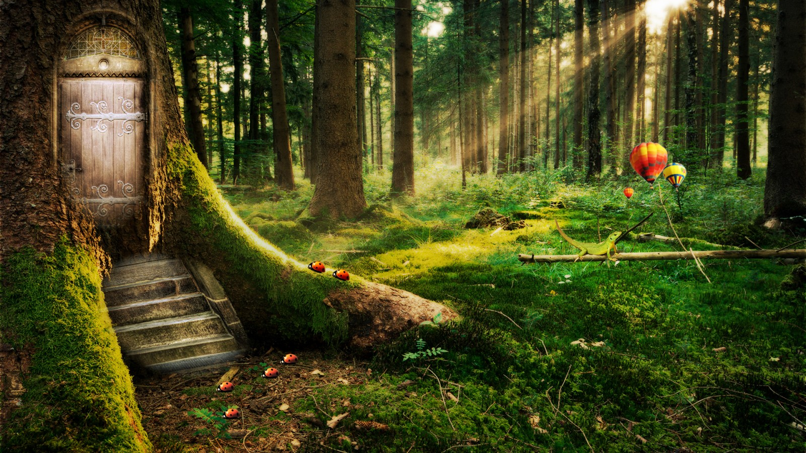 Iphone 5 Hd Space Wallpaper Enchanted Forest Wallpapers Hd Wallpapers Id 11925