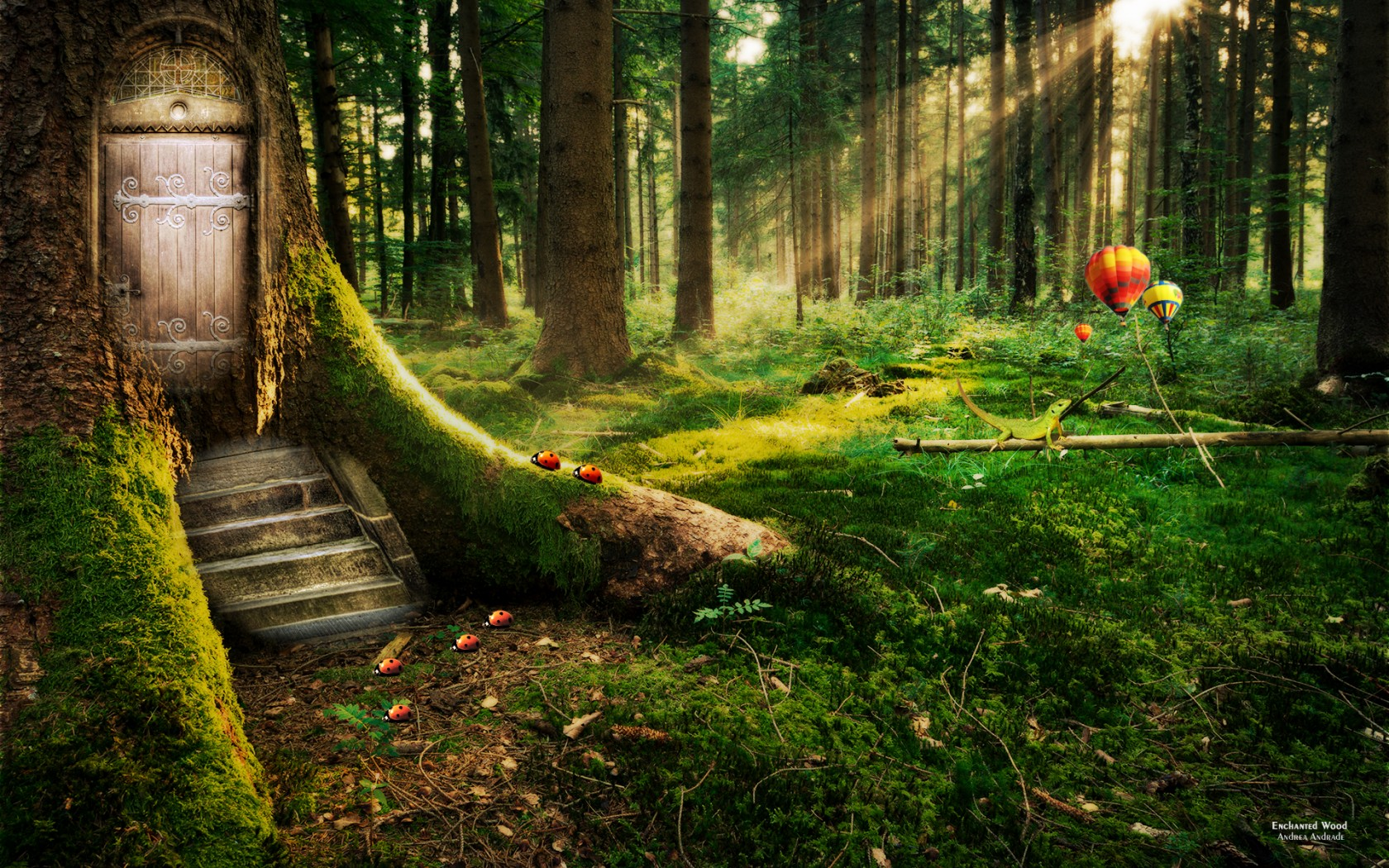 Enchanted Forest Wallpapers  HD Wallpapers  ID 11925