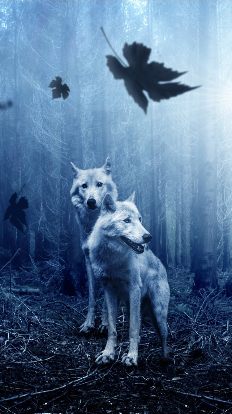 Top Iphone 5s Wallpapers Forest Wolves 4k Wallpapers Hd Wallpapers Id 23141