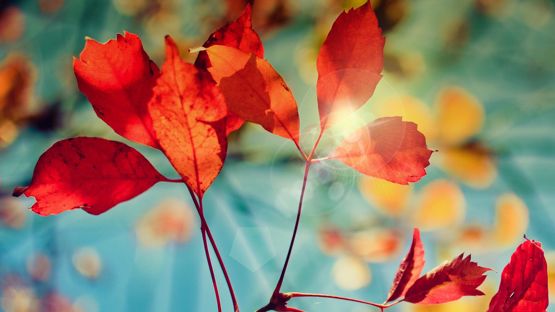 Fall Wallpaper For Windows Glare Of Autumn Wallpapers Hd Wallpapers Id 14263